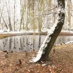 jezienno zimowo