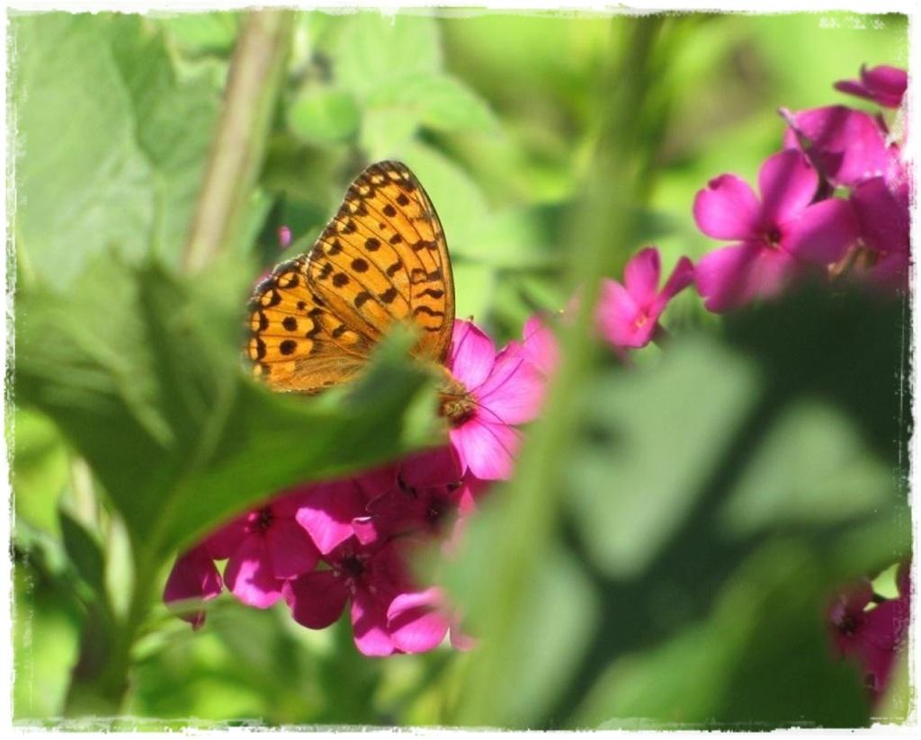 motyle w ogrodzie zogrodemnaty10