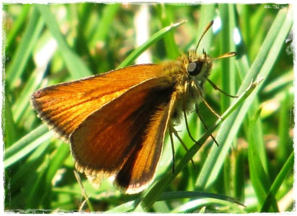 motyle w ogrodzie zogrodemnaty12