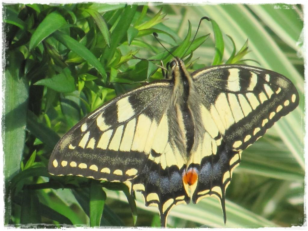 motyle w ogrodzie zogrodemnaty14