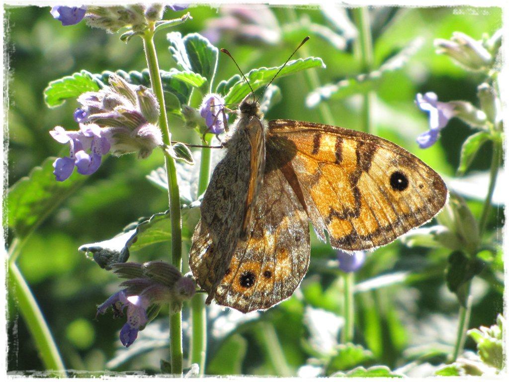 motyle w ogrodzie zogrodemnaty24