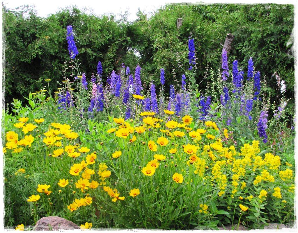 motyle w ogrodzie zogrodemnaty35