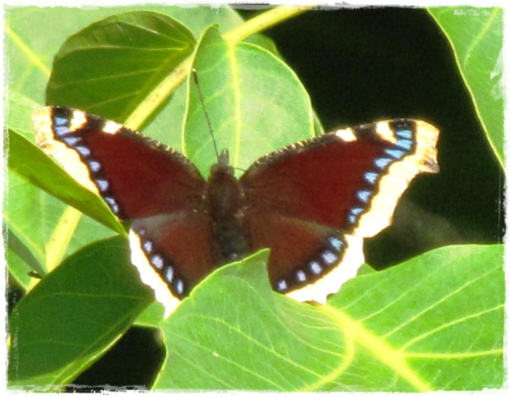 motyle w ogrodzie zogrodemnaty6