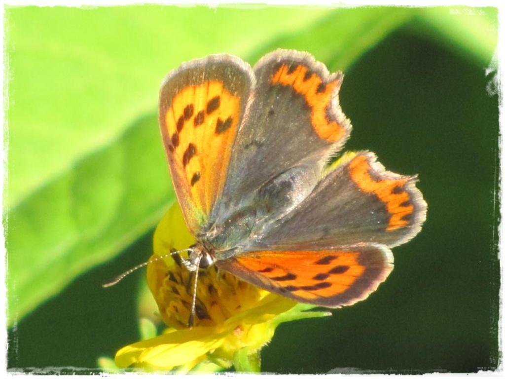 motyle w ogrodzie zogrodemnaty7