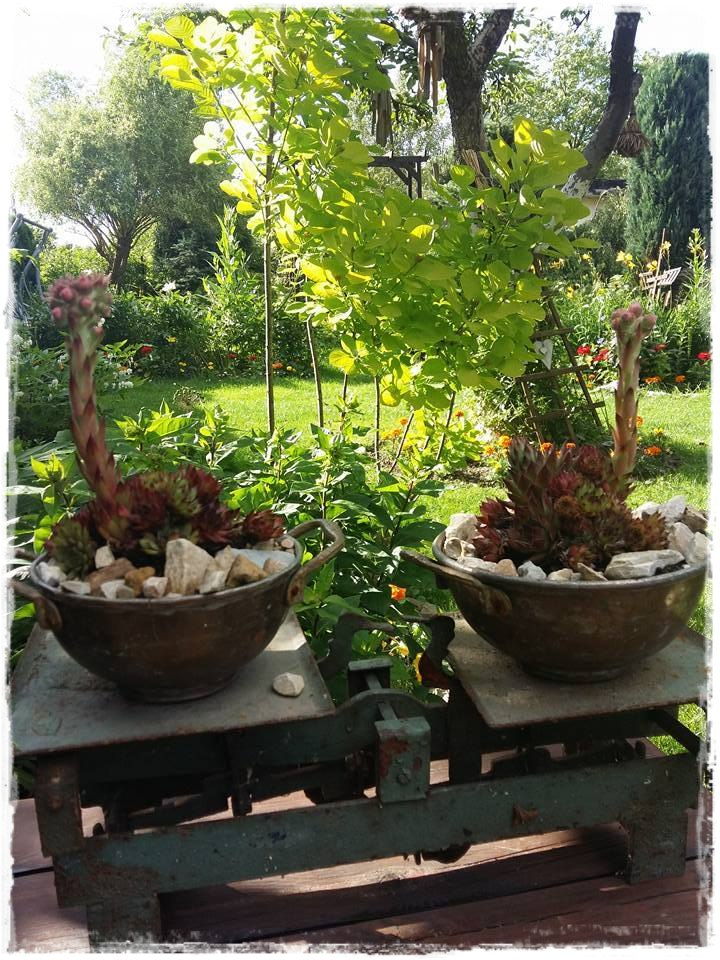 starocie w ogrodzie zogrodemnaty8