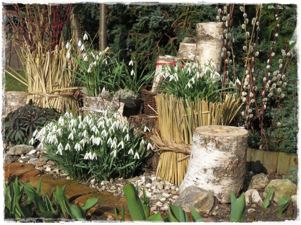kwiaty kwitnące wczesną wiosną zogrodemnaty26