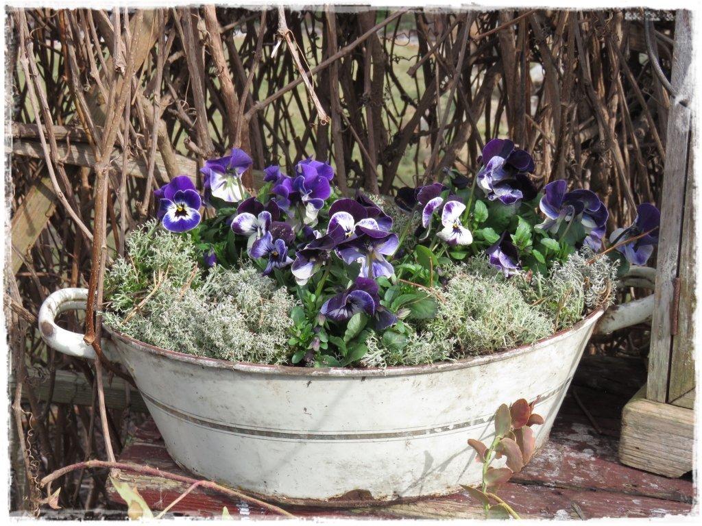 kwiaty kwitnące wczesną wiosną zogrodemnaty20