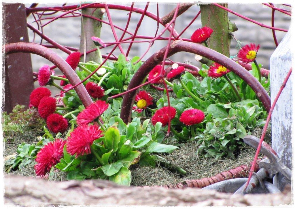 kwiaty kwitnące wczesną wiosną zogrodemnaty21a
