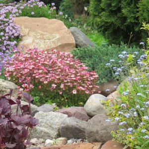 5 zioła w ogrodzie zogrodemnaty