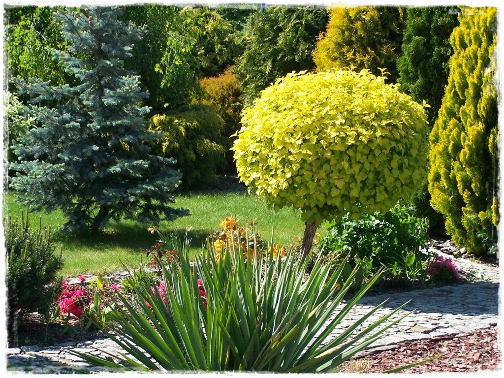Jak Wybrać Rośliny Do Ogrodu Rodzaje Rola I Zasady Które