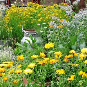 10 zioła w ogrodzie zogrodemnaty