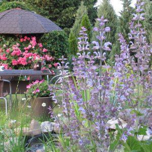 6 zioła w ogrodzie zogrodemnaty