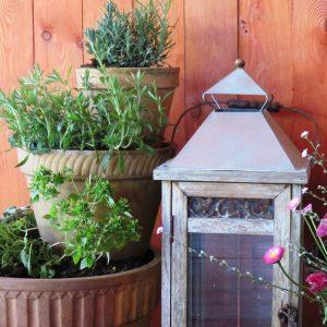 8 zioła w ogrodzie zogrodemnaty