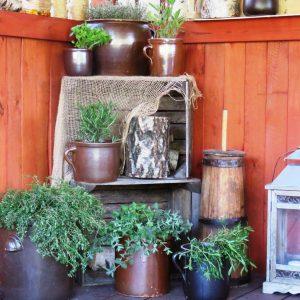 9 zioła w ogrodzie zogrodemnaty