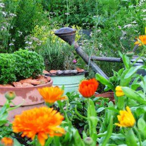 7 zioła w ogrodzie zogrodemnaty