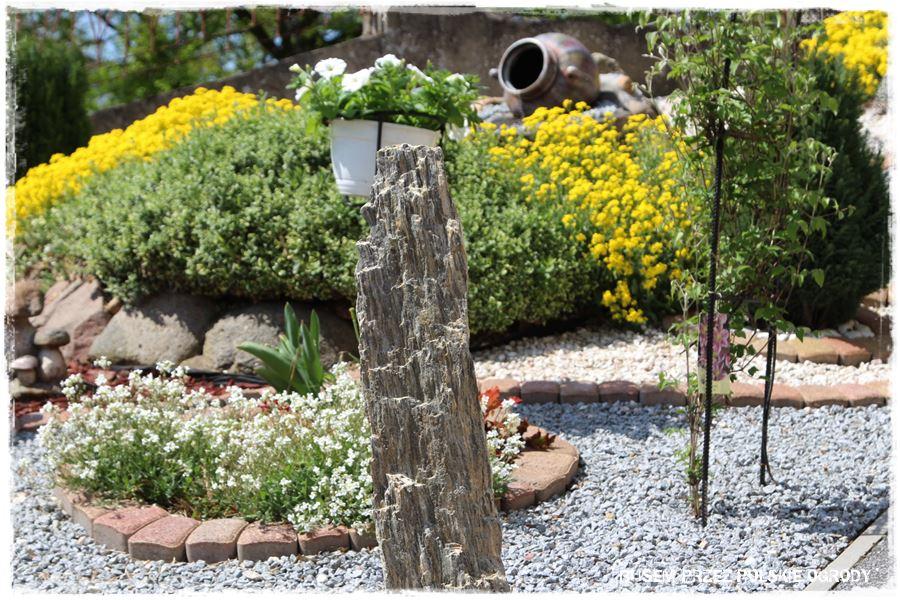 Szpilka gnejsowa w ogrodzie